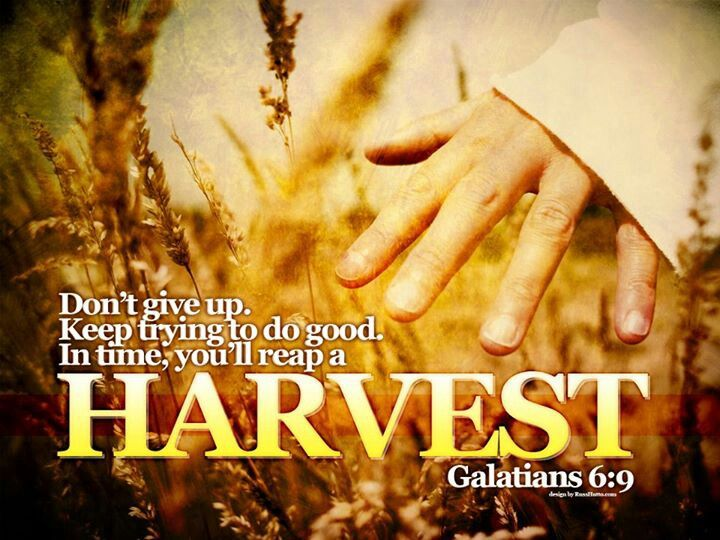 Image result for Galatians 6:9