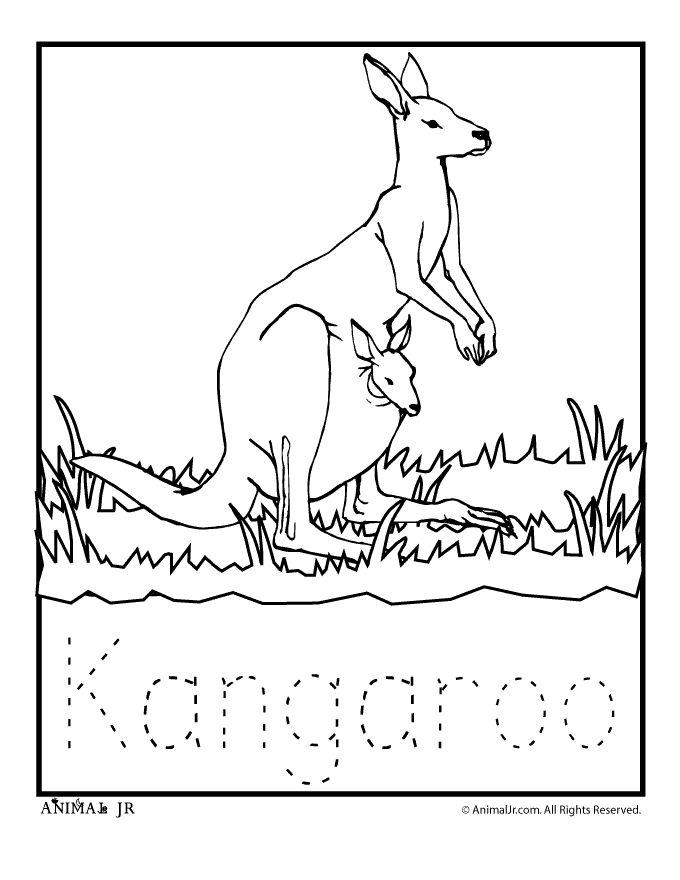 Colouring Sheets Australian Animals Kangaroo Coloring Page Continent Study Australia