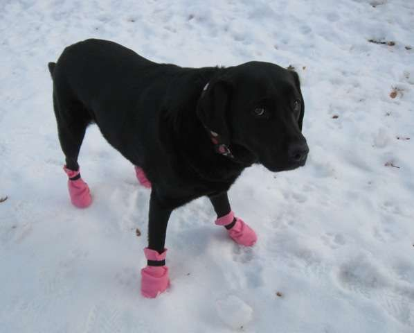 How To Make Booties For Dogs In Snow