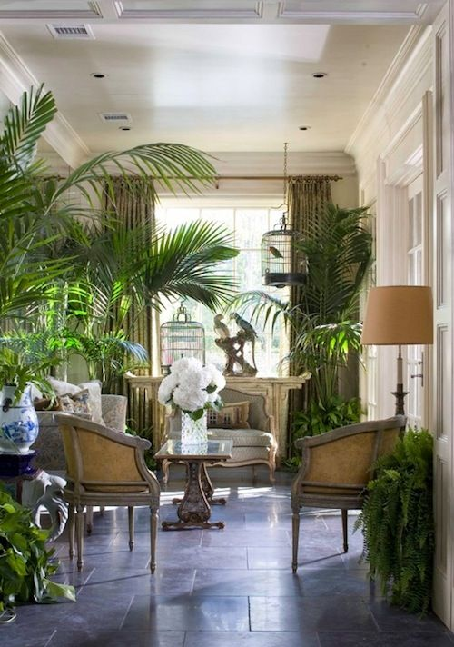 Indoor Plants In The Sitting Room Plant And Outdoor