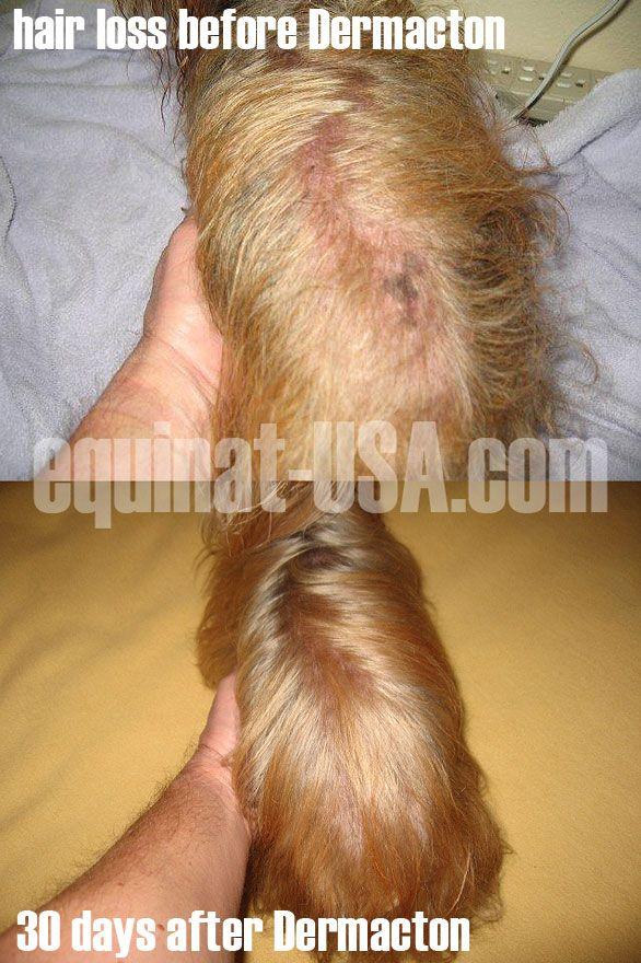 yorkshire terrier skin hair loss rash itching