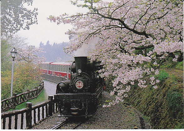 Discover the world on trains alishan forest railway taiwan