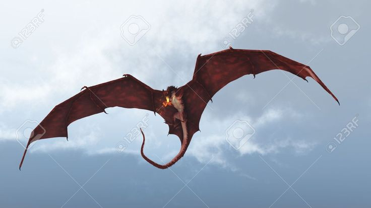 Real dragon flying in the sky
