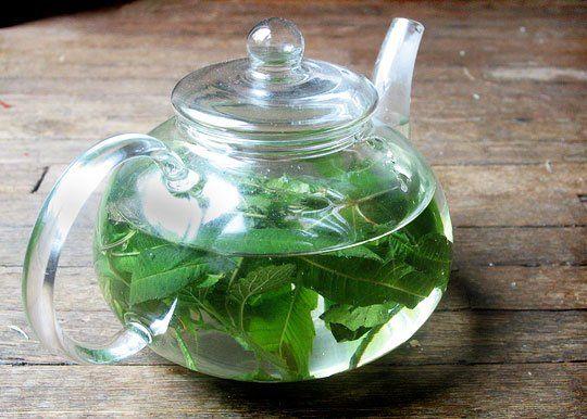 lemon mint granita lemon mint sherbet fettuccine with lemon mint