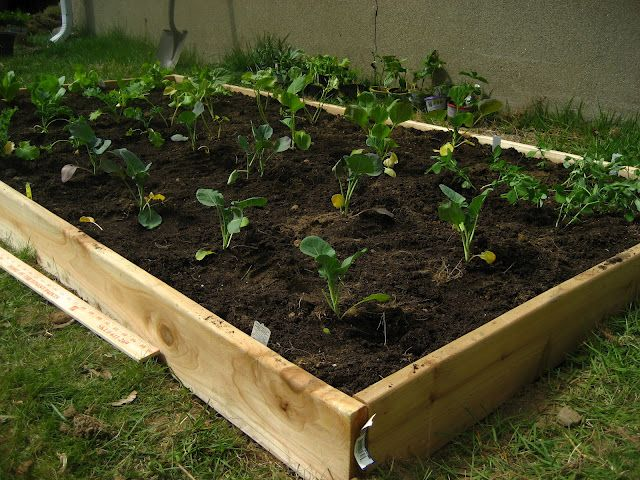 Super cheap and simple raised garden bed garden state - Build raised garden bed cheap ...