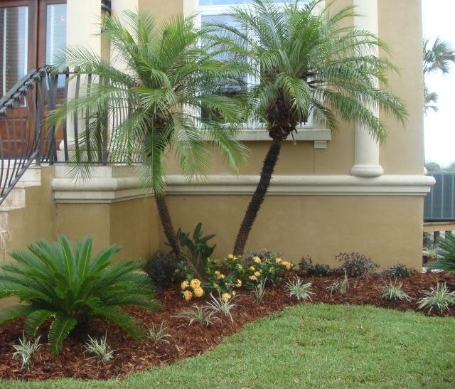 Tropical landscape Landscapes Gardens Pinterest