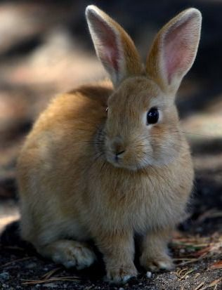 cute light brown bunny | Cute fuzzy creatures I love ...