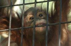 persuasive essay circus animal abuse