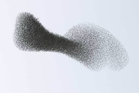 The ability of animal groups—such as this flock of starlings—to shift shape as one, even when they have no leader, reflects the genius of collective behavior—something scientists are now tapping to solve human problems. Photograph by Manuel Presti.