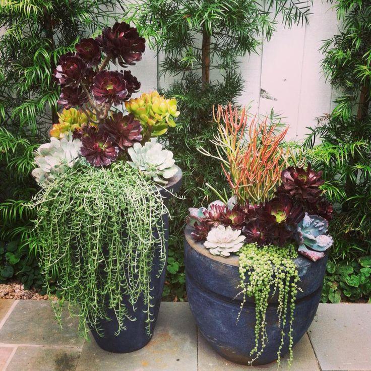 Succulent planters by simply succulent succulent Planters for succulents
