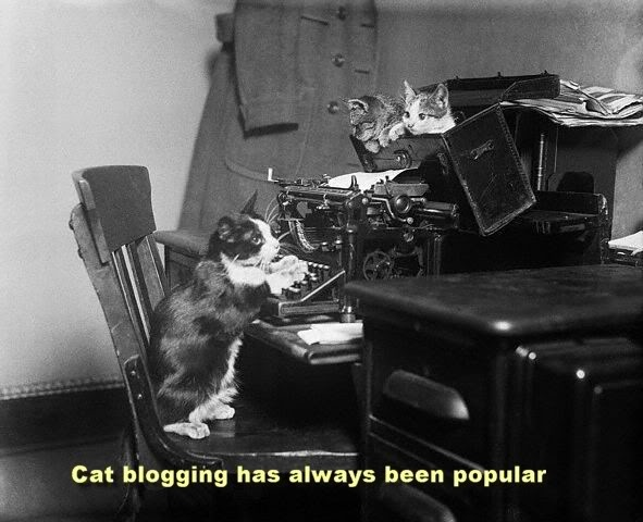 Cat blogging has always been popular.