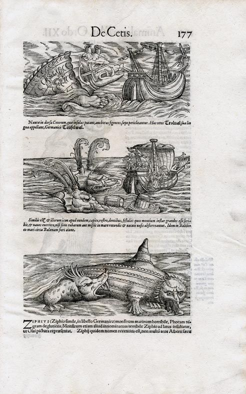 Zoology media studies australia