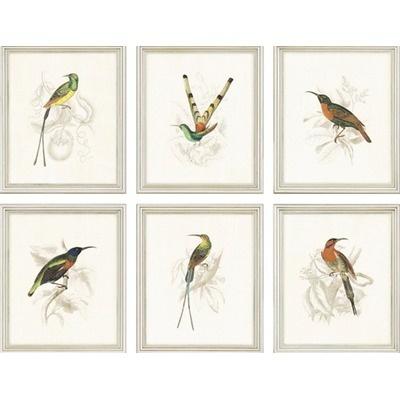 Paragon - bird pictures
