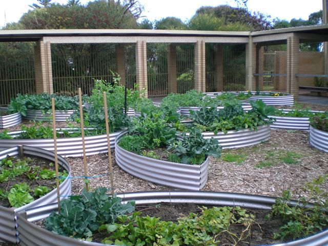 Love the corrugated raised beds Gardening Pinterest