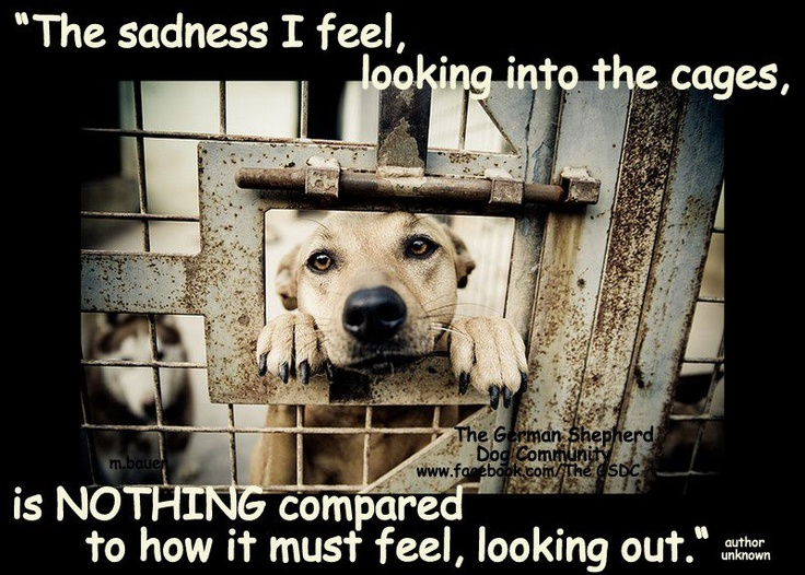 So sad...Thanks to all for repinning to get the word out! Please want a pet before you adopt...