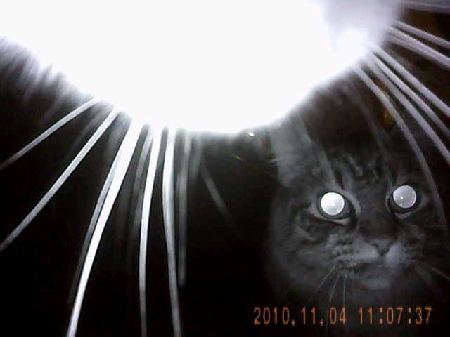 Kitty-Cams.com