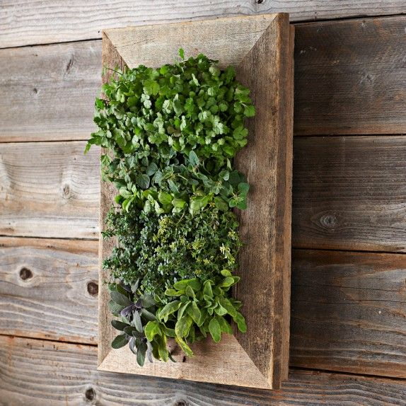 Reclaimed wood wall planter from Williams-Sonoma. REGISTER HERE FOR A ...