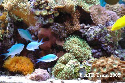 Aquarium Photograpy