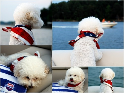 memorial day pet pictures