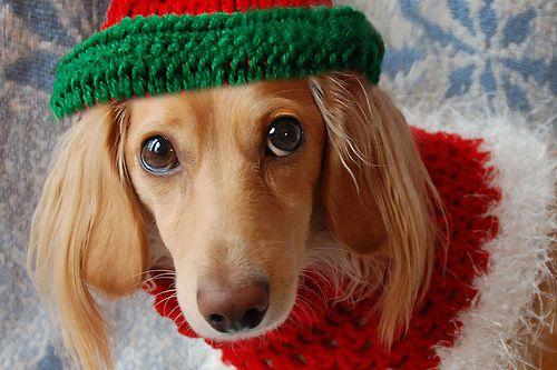 Okay, ready to go Christmas caroling