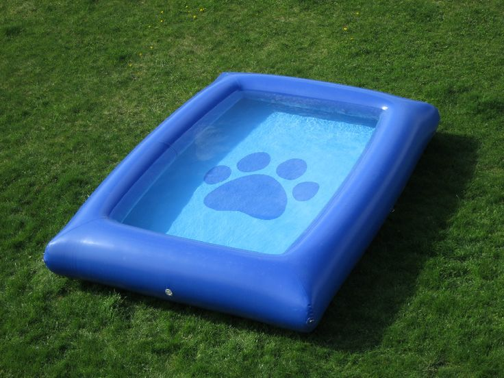 Best Backyard Pool For Dogs : Back > Gallery For > Dog Pool