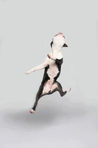 Cute dog dancing