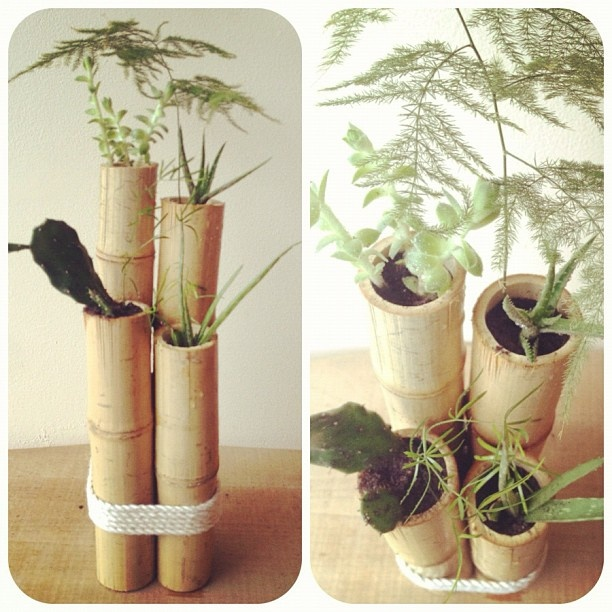 Left over bamboo from the ladder i made pretty things for Making bamboo things