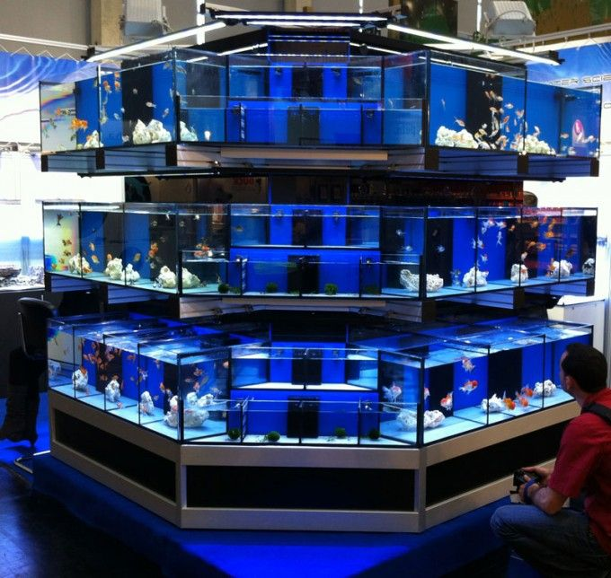 Italy's Oceanlife debuts hi-tech, automated fish display system