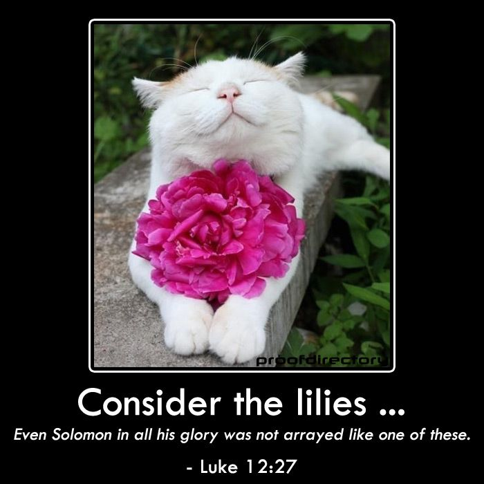 """Consider the lilies ... Even Solomon in all his glory was not arrayed like one of these.""  - Luke 12:27"