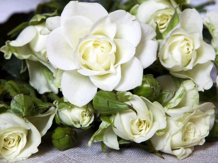 flowers bush tumblr