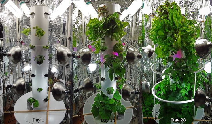Pin by steve dutton on new england aeroponic tower gardens for Indoor gardening green beans