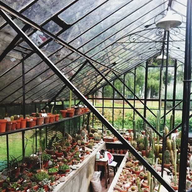Cactus greenhouse gardens pinterest - Outdoor tuinieren ...