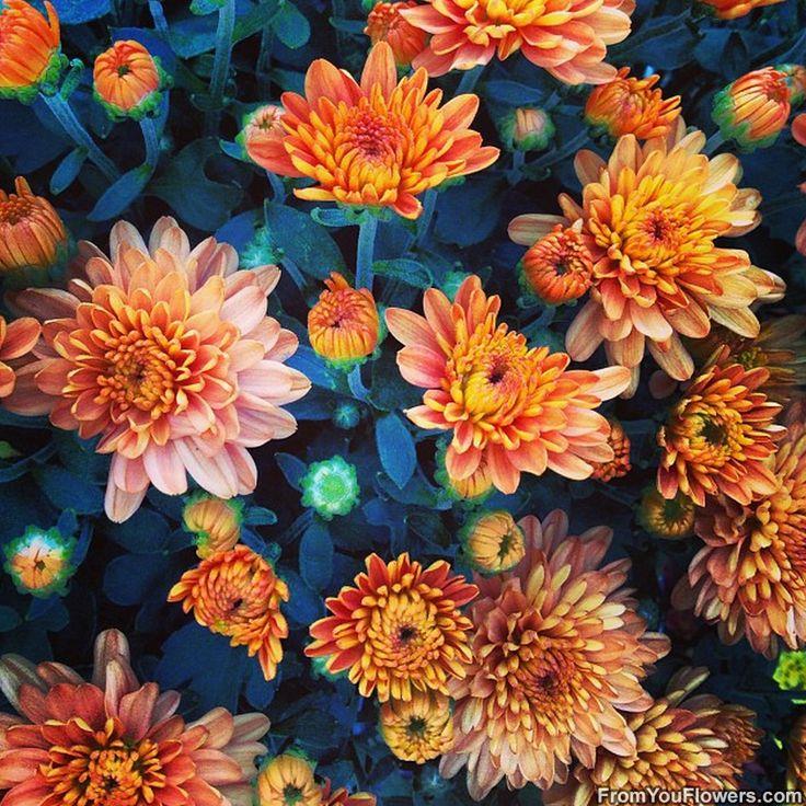 beautiful green fall flower - photo #36