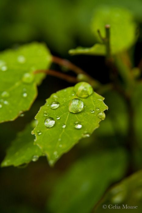 bright green with raindrops