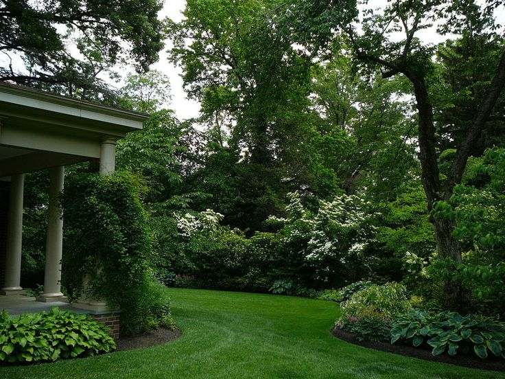 Landscaping Evergreen Trees For Privacy : Landscape privacy borders gardening landscaping