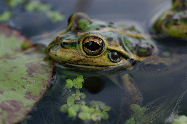 frogs in a pond yes i think i will around the yard pinterest