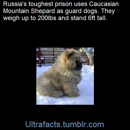 Russias toughest prisons guard dogs