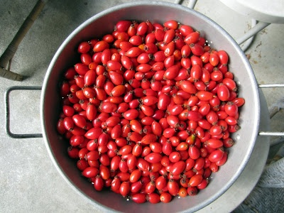 Foraging and Canning Rose Hip Jam (not really a great how-to resource ...