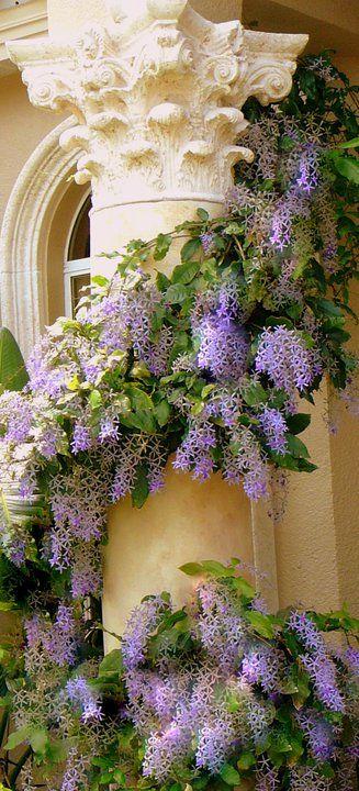 Petrea vine.  Common name is Sandpaper vine.  It does look a lot like my favorite Wisteria vine