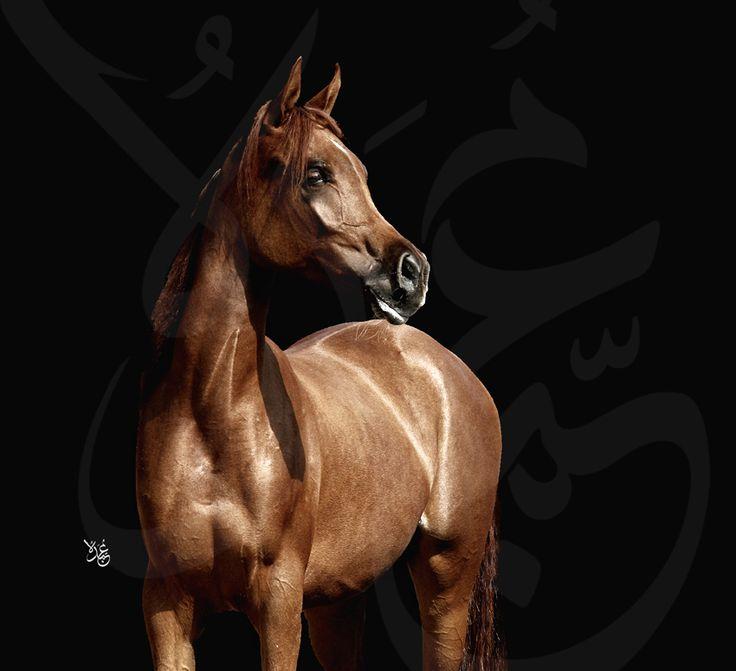 Arabian beauty