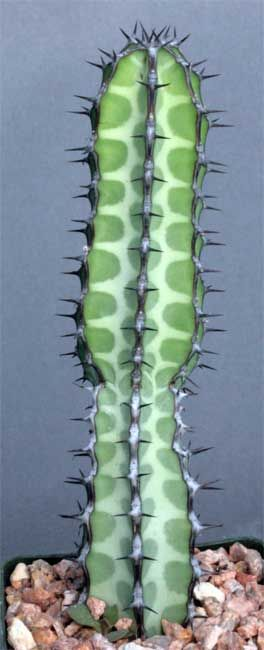 Необычные растения планеты
