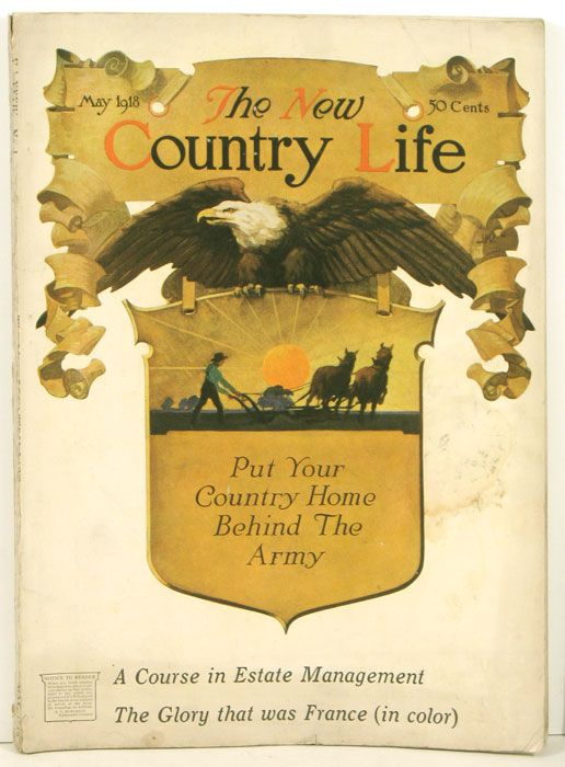 life in a new country essay