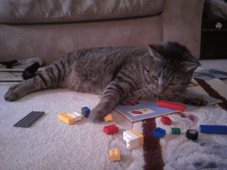 cat playing w/legos