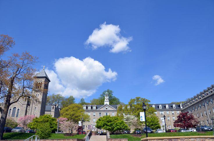 university of mary washington essay