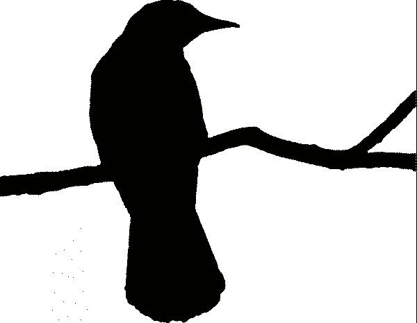 Crow silhouette | Tattoos | Pinterest