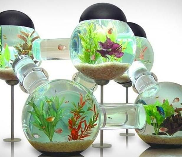 Bad ass aquarium bad ass fish tanks pinterest for Is fish bad for you