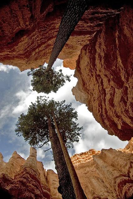 Peering upwards from within Bryce Canyon, Utah, USA