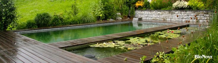 Pin by shanon turner on backyard oasis pinterest Piscine biologique