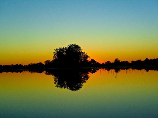Okavango alba