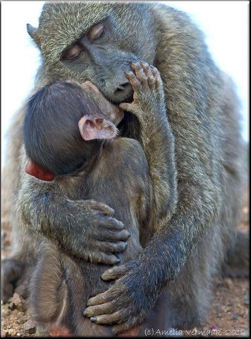 Monkey kissing cat